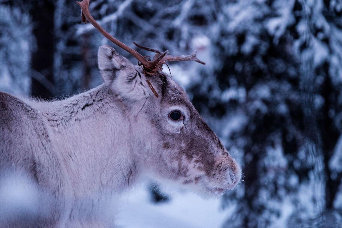 djurfotograf Stockholm