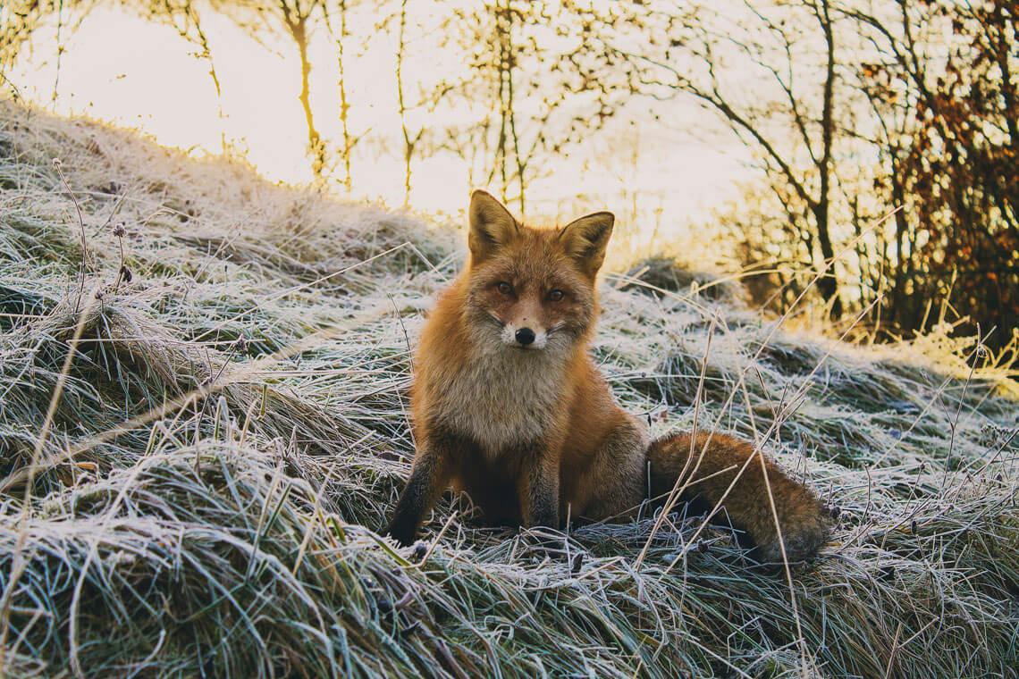 djurfotografer i Stockholm