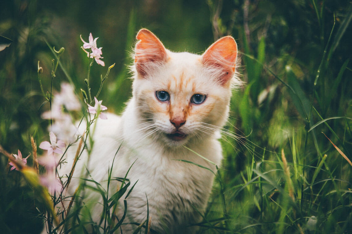foto katt