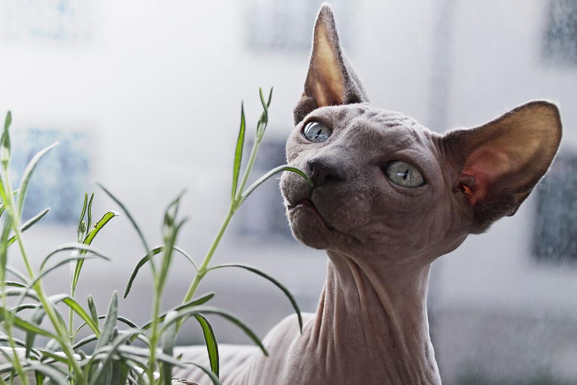 fotograf husdjur