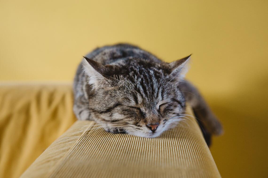fotograf katt