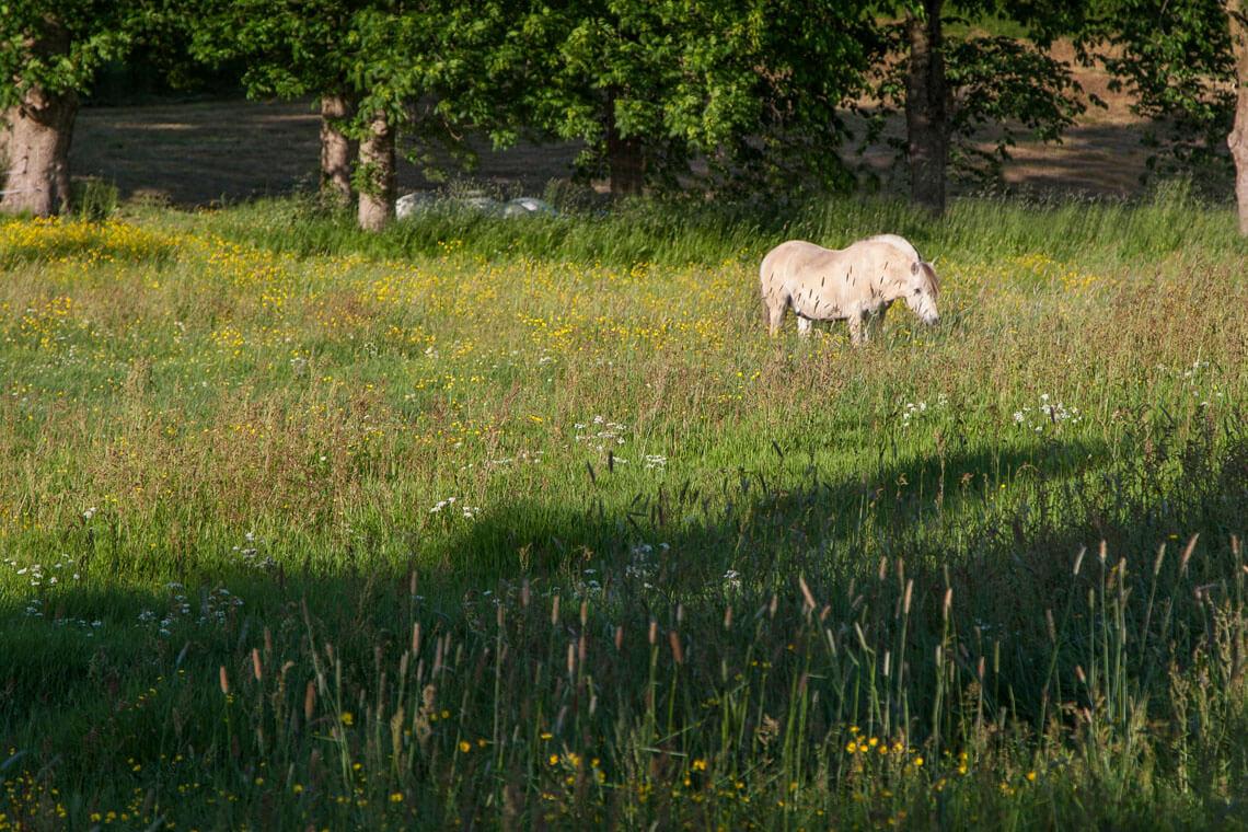 hästfotograf